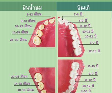 ฟันของหนู